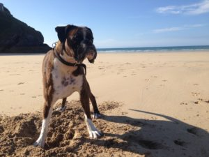 Dog Friendly Beach & Holiday Guide 2020